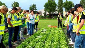 Summer-School-2018_Syngenta-lettuce-session-by-Els-Groot-3