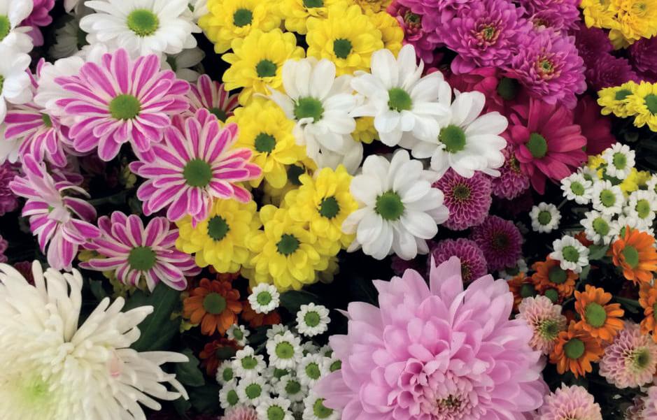 PIX bloemen  scaled e