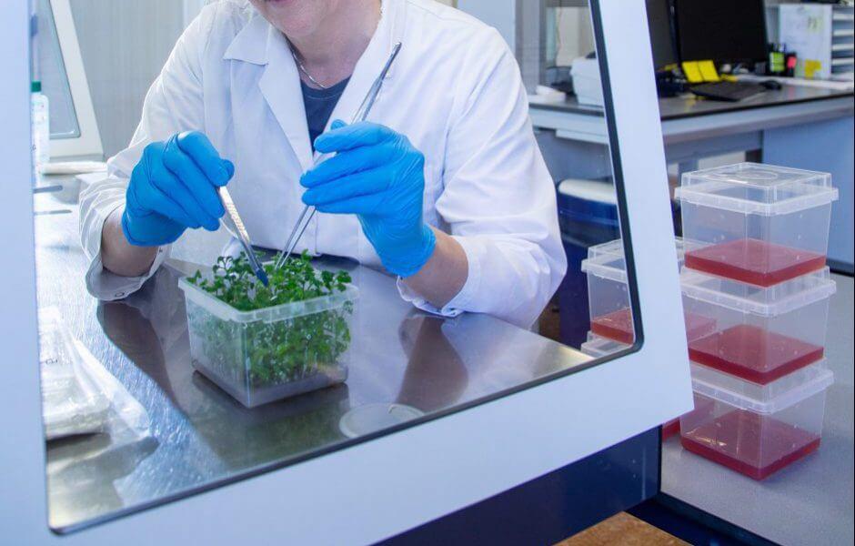 Dame in steriele kast planten Dekker Chrysanten
